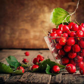 Summer Red Berries Hawthorn — Stock Photo