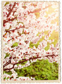 Retro Card with Cherry Blossoms — Stock Photo