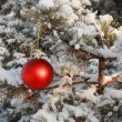 Christmas Tree Red Ball Decoration - Outdoors - Stock Photo