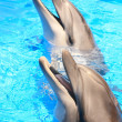 Dolphins Heads : Smiles in Blue Water - Stock Photo - Stock Photo