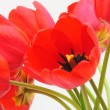 Foto Stock: Valentines or Mothers Day Tulip Card - Stock Photo