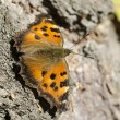 Butterfly ordinary urticaria sits on a birch — Stock Photo