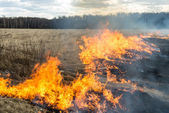 Fire. old grass burning in a field near the forest — Stock Photo
