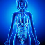 ������, ������: All organs of female body in blue x ray loop