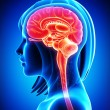 Anatomy of brain cross section in blue — Stock Photo #13955661