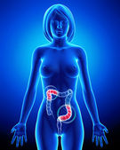 Female anatomy - partial pain in digestive system — Stock Photo