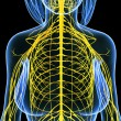 Nervous system of female body  view isolated in black — Photo