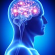 Male active brain - Stock Photo