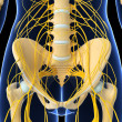3d art illustration of Nervous system — Stock Photo