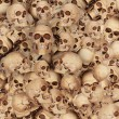 Lots of skulls — Stock Photo