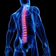 Stock Photo: Back pain anatomy