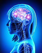 Female active brain — Stock Photo