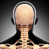 Back view of human skeleton isolated — Stock Photo
