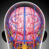 Back view of brain circulatory and nervous system isolated with gray — Stock Photo
