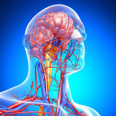 Side view of brain circulatory system with, eyes, throat, teeth isolated in blue background — Stock Photo