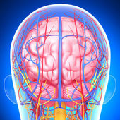 Back view of brain circulatory and nervous system with, eyes, throat, teeth isolated in blue — Stock Photo
