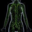 3d art illustration of lymphatic system of female — Stock Photo