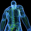 3d art illustration of lymphatic system of male - 
