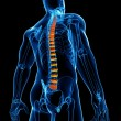 Back pain anatomy - Stock Photo