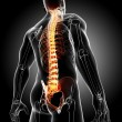 Back pain anatomy — Stock Photo