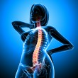 Stock Photo: Female spine pain x-ray anatomy