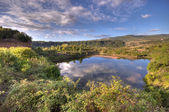 Country pond — Stock Photo