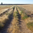 Road through the field — Stock Photo
