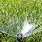 Garden sprinkler — Stock Photo #13890186