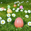 Colorful Easter eggs in a field - Stock Photo