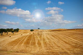 Wheat haystack landscape — Stock Photo