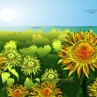 Sunflower on the field with blue sky — Stock Vector