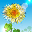 Sunflower over blue sky  — Stock Vector