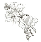 Hand drawing Hibiscus flower — Stockvektor