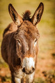 Sight of a donkey — Stock Photo