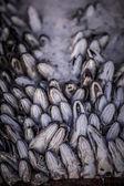 Hake fish — Stock Photo