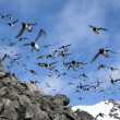 Birds over the Arctic Sea — Stock Photo #13824239