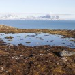 Arctic landscape, mossy tundra — Stock Photo