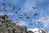 Birds over the Arctic Sea — Stock Photo