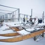 Masher dog winter sleds — Stock Photo #14688513