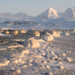 Arctic landscape — Stock Photo #14688871
