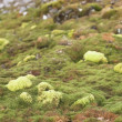 Stock Photo: Arctic tundra