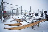 Masher dog winter sleds — Foto Stock