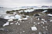 Arctische fjord na de winter — Stockfoto