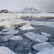 Ice on the frozen Arctic fjord - Svalbard — Stock Photo #24405207