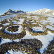 Patterned ground in the Arctic tundra - natural phenomenon of rocks selection - Spitsbergen, Svalbard — Stock Photo #24406989