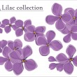 Stock Vector: Lilac vector collection