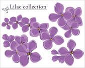 Lilac vector collection — Stock Vector
