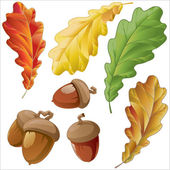 Leaves and acorns of oak — Stock Vector