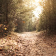 Stock Photo: Beautiful autumn - on path in forest