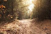 Hermoso otoño - en el camino en el bosque — Foto de Stock